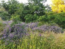 Countryscape i printemps arkivfoto