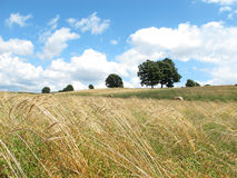 Countryside. Italian countryside with trees,grass and blue sky, Italy Royalty Free Stock Images
