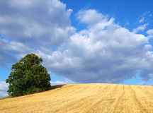 Countryside Royalty Free Stock Photography