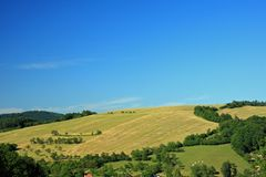 Countryside. Corn field in summer day Stock Image