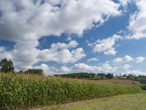 Countryside. English countryside scene with maize crops royalty free stock photo