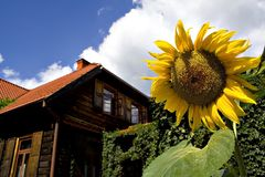 Countryside. Beautiful countryside House and sunflower Stock Images