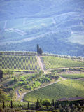 Countryside. With Chianti vineyards, olive tree plantations and cypruss trees, afternoon light stock image