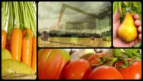 Countryside activities collage. Harvest and agricultural products