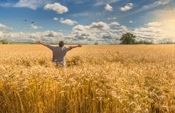 Man celebrates ripening cereals, Europe. Countryside agricultural landscape with field of ripening wheat and wild flowers on the foreground royalty free stock photography