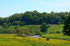 Countryside, Alnwick, England Stock Photos