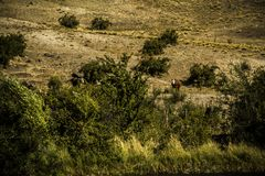 Countryside and Animal Love. Don`t annoy the Cows in the Countryside because they are relaxing royalty free stock images