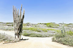 In the countryside from Aruba Royalty Free Stock Photography