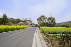 Countryside asphalted road in flowering spring afternoon Royalty Free Stock Images