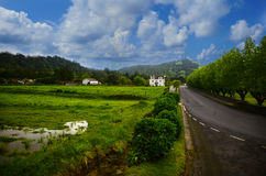 Countryside in the Azores Stock Photography