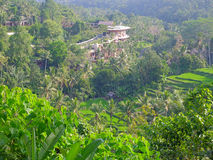 Countryside in Bali Stock Image