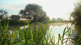 Countryside beautiful landscape, grass, river, morning sunshine. Stock footage stock video
