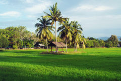 Rice Paddy Field in Langkawi Royalty Free Stock Image