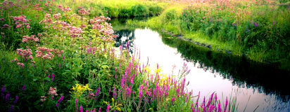 Countryside Beauty. A small river running through a field of wildflowers Stock Photography