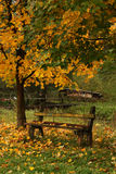 Countryside bench in autumn Stock Images