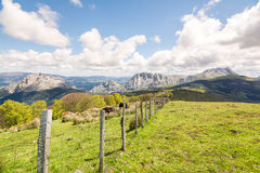Countryside at biscay, spain. Landscape at biscay coutryside in basque country Royalty Free Stock Photo
