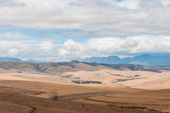 Countryside between Bot River and Caledon. View of the countryside between Bot River and Caledon in the Overberg region of the Western Cape Province of South Stock Image