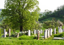 Countryside cemetery Stock Image