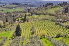 Countryside and chianti vineyards near San Gimignano inTuscany, Italy. Europe royalty free stock photo