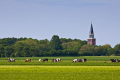 Countryside with church and cows Stock Photo