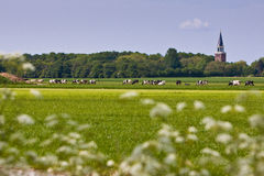 Countryside with church and cows. In a meadow Royalty Free Stock Image
