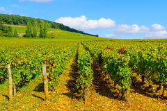 Countryside in Cote dOr, Burgundy. Countryside with fields and vineyards, in Cote dOr, Burgundy, France stock image