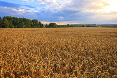 Countryside, Czech Republic. Royalty Free Stock Photos