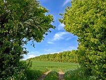 Countryside in Denmark Royalty Free Stock Photos