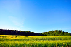 Countryside on the evening Royalty Free Stock Images