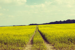 On the Countryside. In Fall Royalty Free Stock Images