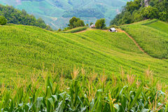 Countryside farm and green fields with small cottage Stock Photos