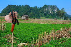 Countryside farm. At tak province, thailand Royalty Free Stock Photo