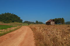 Countryside farm. At tak province, thailand Stock Images