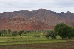 Countryside. Farmland near penek in eastern turkey stock images