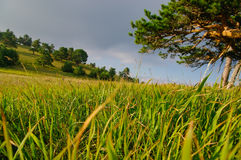 Countryside field. Low angle view of grass field in countryside with hillside in background Royalty Free Stock Photography