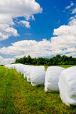 Countryside field Royalty Free Stock Images