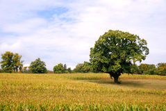 Countryside field Royalty Free Stock Photos