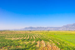 Countryside field and blue sky. Scenery Stock Photo
