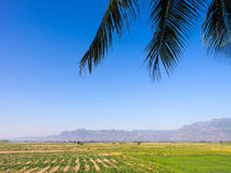 Countryside field and blue sky scenery. With coconut leaves foreground Royalty Free Stock Photo