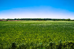 Countryside field. In natural surroundings Royalty Free Stock Image