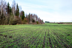 Countryside fields in autumn with young crops Royalty Free Stock Images