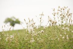 Countryside with flowers and tree. S in a hazy atmosphere Stock Photos
