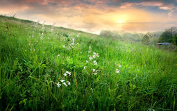 Countryside and fog Royalty Free Stock Images