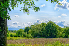 Countryside with foliage Royalty Free Stock Images