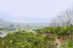 Countryside footpath in orchard on sunny spring day Royalty Free Stock Photography