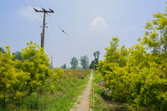 Countryside footpath on sunny summer day Royalty Free Stock Photography
