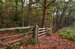 A countryside gate. A autumn scene showing a wooden gate in the middle of a small wood Royalty Free Stock Image