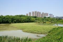 Countryside grassy pond near city at sunny summer noon Royalty Free Stock Photo