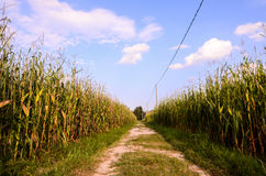 Countryside Gravel Road Royalty Free Stock Photography