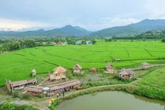 Countryside. Green Field in Nan province stock photo